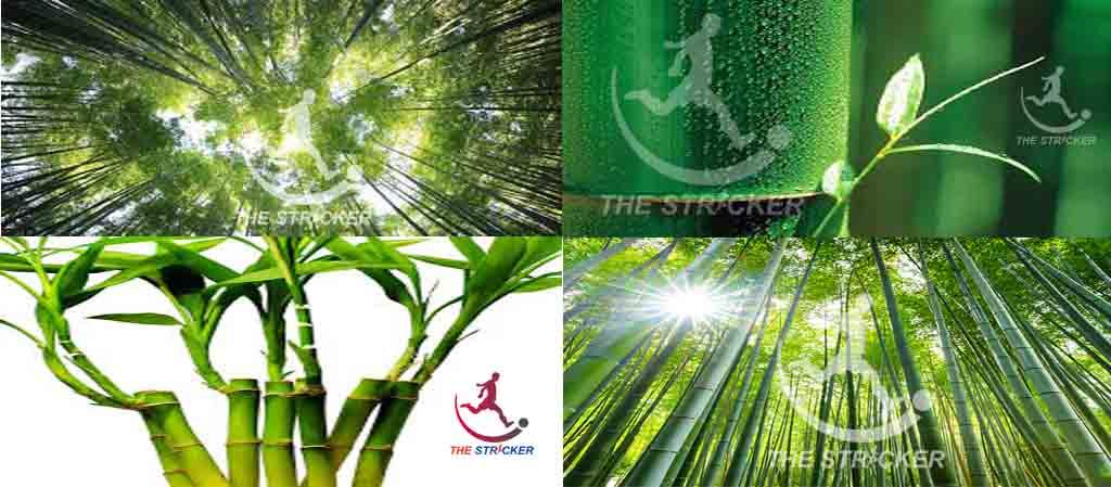 15 interesting facts Bamboo-বাঁশ ফাইবার