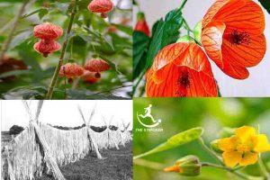 Abutilon Fiber | Bast Fiber | Innovation of Textile Fiber | The Stricker |