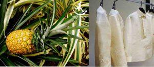 Pineapple Fiber | Properties and Uses of Pineapple Fiber | Bast Fiber| The Stricker