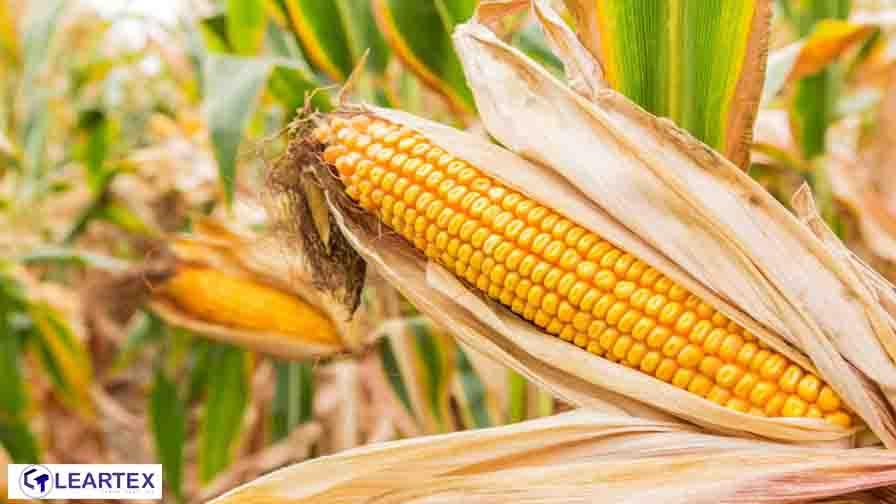 Corn Fiber-Leartex